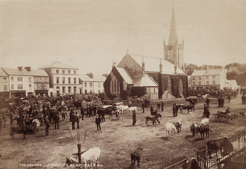 Cattle fair in Listowel Square, 1904. It's clear from this photograph that the Square was the commercial hub of the town in those days.